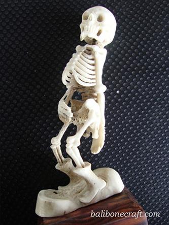 Skull Standing